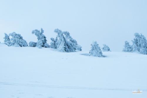 Ledoví muži stoupají k vrcholu - Jeseníky