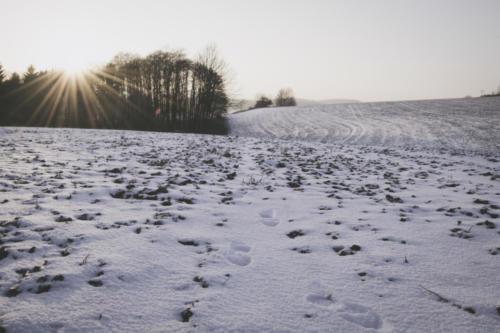 Orlické podhůří - zima 2017
